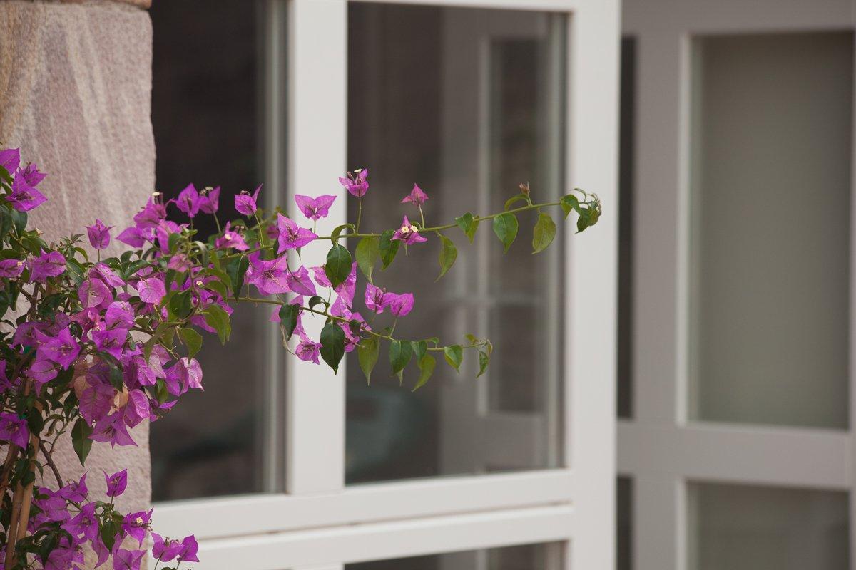 Flores de casa rural en Cantabria